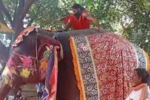 हात्तीमा चढेर योग गर्दा गर्दै खसे बाबा रामदेव (भिडियोसहित)